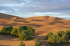 Life in the desert Stock Image