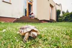 Life with domestic animals. Man resting and his turtle walking in grass on the garden stock photography