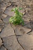 Life after a drought Stock Photos