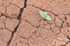 Life and drought Stock Images