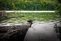 Life of ducks Stock Photography