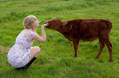 Life on a farm. Young pretty cheerful blond woman with calf on a countryside royalty free stock image