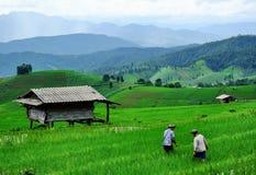 LIFE OF FARMER. FARMER OF PRABONGPEANG Stock Photography