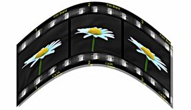 Life on Film. A daisy on film Stock Photo