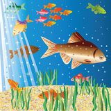 Life of fishes in sea depths Stock Photo
