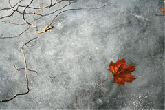 The life frozen over. Winter shot, about a frozen leaf Royalty Free Stock Photos