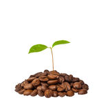 Life-giving force of coffee Royalty Free Stock Photography