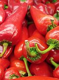 The Life Giving Green Stems Of These Red Chili Peppers royalty free stock photography