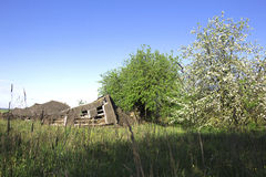 Life goes on. Ruined barn in rural outback near flowering trees on a background of clear sky of spring. «If time exists in nature, then it is not already open stock photography