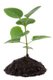 Life and growth concept with a green small plant Stock Images