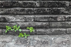 Life Growth Stock Photography