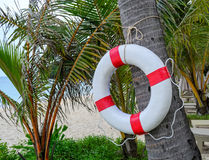Life Guard ring Stock Image