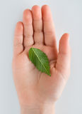 Life in a hand. Green leaf in young hand Stock Photo