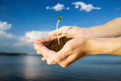 Life in hands Stock Photo