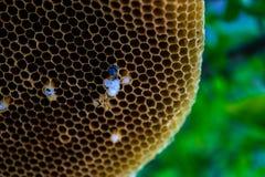 Life. In the honeycomb newborn Stock Photo