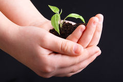 Life In Your Hands Royalty Free Stock Images