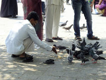 Life in India, man feeding pigeons Stock Image