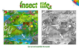 Life of insects on forest clearing. Royalty Free Stock Photo