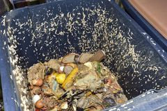 Maggots in a compost bin. Life of its own in a compost bin Royalty Free Stock Images