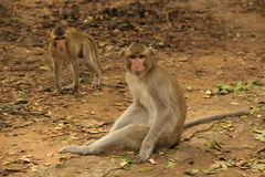 The life of monkey Stock Images