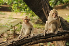 The life of monkey Royalty Free Stock Photo