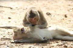 The life of monkey Royalty Free Stock Photos