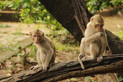 The life of monkey Royalty Free Stock Images