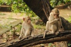 The life of monkey Stock Image