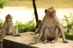 The life of monkey Stock Photography