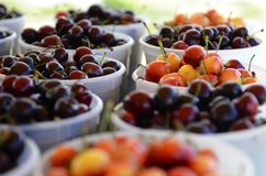 Life is just a bowl of cherries Royalty Free Stock Images