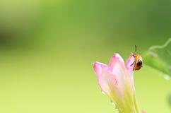 Life of ladybug Stock Photography