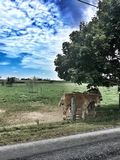 Life in Lancaster County Royalty Free Stock Image