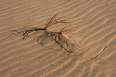 Life in Libyan desert Royalty Free Stock Photography