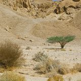 Life in a lifeless desert. Life in a lifeless infinity of the Negev Desert in Israel. Breathtaking landscape and nature of the Middle East Stock Image