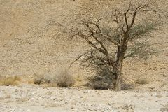 Life in a lifeless desert. Life in a lifeless infinity of the Negev Desert in Israel. Breathtaking landscape and nature of the Middle East royalty free stock photo