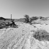 Life in a lifeless desert. Life in a lifeless infinity of the Negev Desert in Israel. Breathtaking landscape and nature of the Middle East. Black and white photo royalty free stock images
