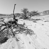 Life in a lifeless desert. Life in a lifeless infinity of the Negev Desert in Israel. Breathtaking landscape and nature of the Middle East. Black and white photo stock photography