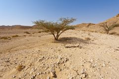 Life in a lifeless desert. Life in a lifeless infinity of the Negev Desert in Israel. Breathtaking landscape and nature of the Middle East Stock Images