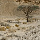 Life in a lifeless desert. Life in a lifeless infinity of the Negev Desert in Israel. Breathtaking landscape and nature of the Middle East Royalty Free Stock Photography