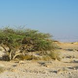 Life in a lifeless desert. Life in a lifeless infinity of the Negev Desert in Israel. Breathtaking landscape and nature of the Middle East stock photography