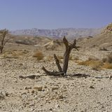 Life in a lifeless desert. Life in a lifeless infinity of the Negev Desert in Israel. Breathtaking landscape and nature of the Middle East stock photo