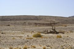 Life in a lifeless desert. Life in a lifeless infinity of the Negev Desert in Israel. Breathtaking landscape and nature of the Middle East Stock Photos