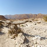 Life in a lifeless desert. Life in a lifeless infinity of the Negev Desert in Israel. Breathtaking landscape and nature of the Middle East royalty free stock images