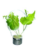 Life in light bulb Royalty Free Stock Photography