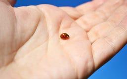 Life lines on the palm and ladybug Stock Photo