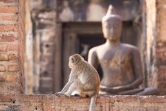 .The life of long tail funny monkeys with archaeological sites. Lopburi Thailand. The life of long tail funny monkeys with archaeological sites. Lopburi Thailand royalty free stock photos