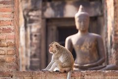 .The life of long tail funny monkeys with archaeological sites. Lopburi Thailand. The life of long tail funny monkeys with archaeological sites. Lopburi Thailand stock photography