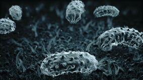 From the life of microbes, bacteria and virus. High magnification. Medical and science animation stock video