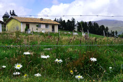 Life in the mountain. Beautiful house at mountain, giant daisies in the garden Stock Image