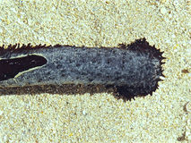 Life of an old sea slug Stock Photos